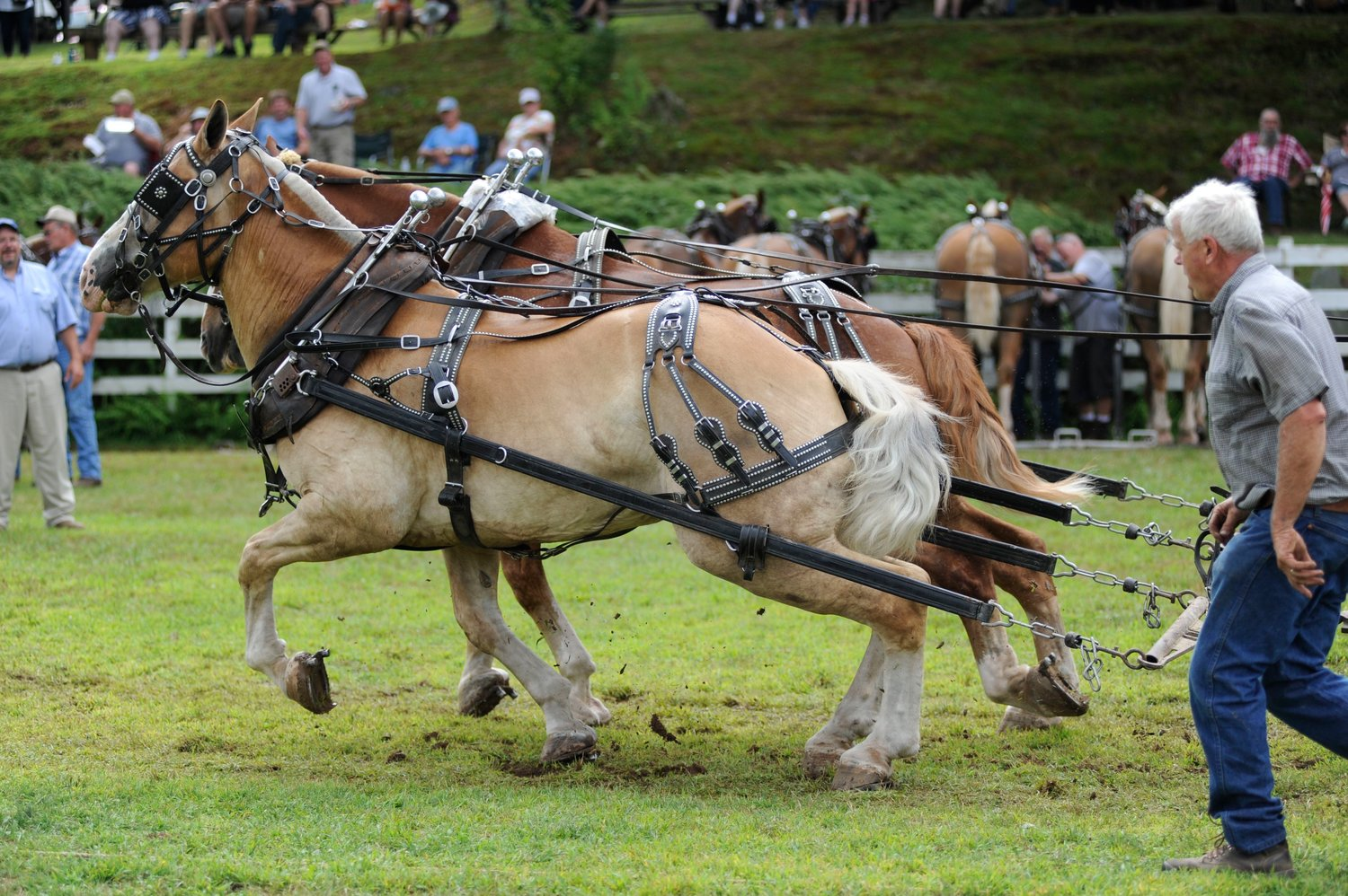 Josh Woolheater of Tannersville, NY encourages his team of draft horses to pour on the horse power.