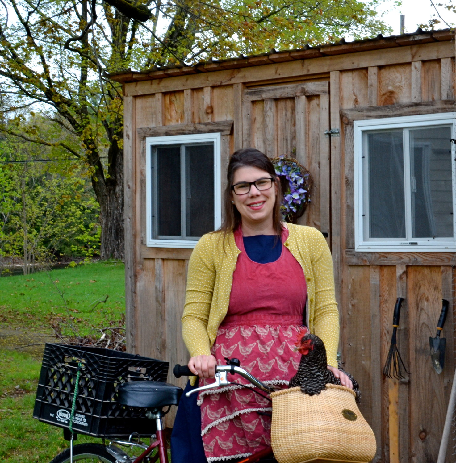 The Chicken Librarian doing what she does best: Trying to get the chickens to pose for pictures. Here is Gertie McGhee, who is not happy with being placed in a bike basket. Chicken Librarian dreams of taking bike rides with chickens while wearing chicken aprons. All in a day's work.