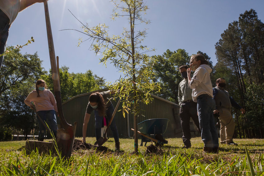 Students of Josh Castleberry finish planting an oak tree on Earth Day at Central Carolina Technical College.