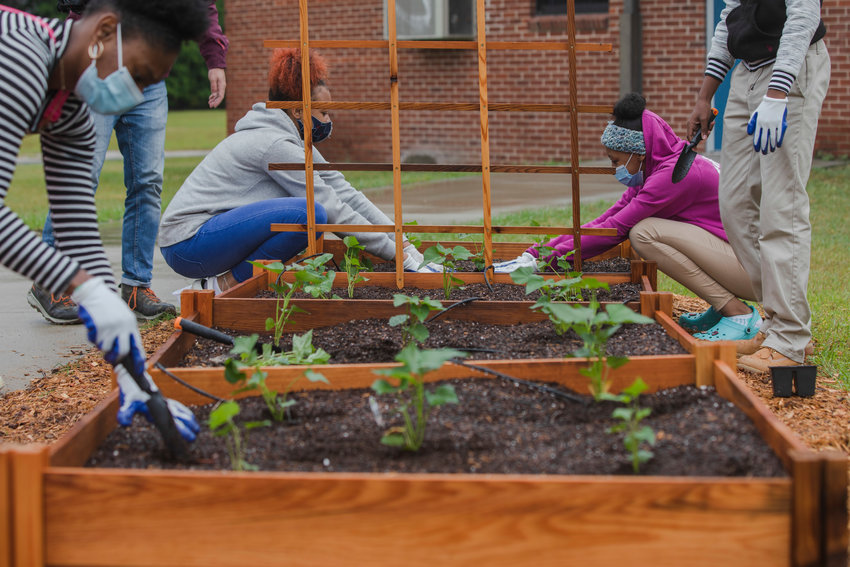 Students at R.E. Davis College Preparatory Academy plant sweet potatoes on Wednesday at the school's new garden, made possible through the 2021 School Garden and Education Assistance Program.