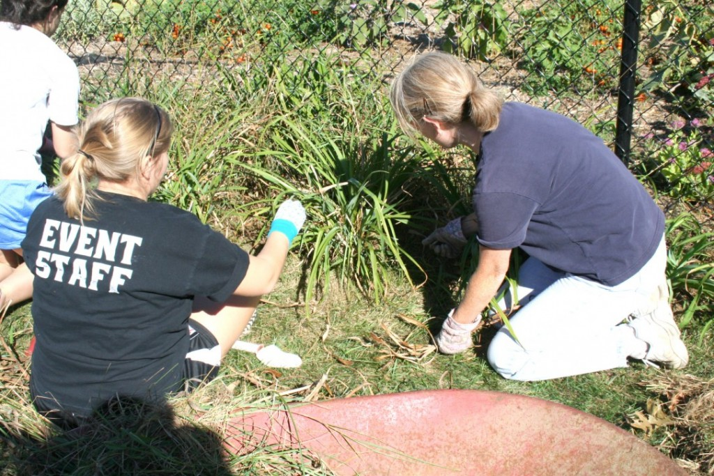 """COMING TOGETHER: Sarah Digirolamo, left, a senior at PC helps Elaine Papa, one of the parish gardeners, keep weeds out of the garden using a """"no till"""" method.  Digirolamo is a member of the Friars Club at PC and volunteered her time to help the gardeners."""